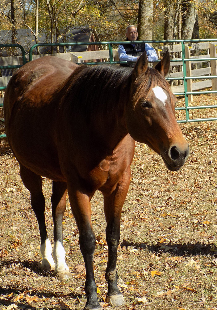 Equine Guided Coaching